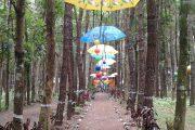 Keren….!!Wahana Wisata Rumah Pohon Tiga Desa Sumberarum Songgon