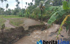 Banjir Bandang Menerjang Puluhan Hektare Lahan Pertanian di Bondowoso
