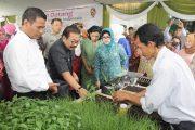 Mentan Launching 'Cabai Jawa Timur Pakde Karwo 1'