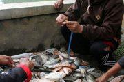 Ribuan Ikan Di Telaga Ngebel Ponorogo, Mabuk
