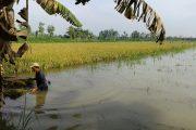 Pembangunan Tol Sumo Ditentang Warga