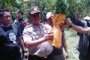 Aparat Himbau Waspadai Tanaman Ganja