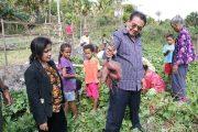 Senator Iban Medah : Indofood Minati Ubi Ungu Asal NTT