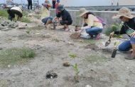 Lestarikan Pantai, Komunitas Lintas Iman Tanam 1500 Pohon