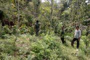 Tanah Ambles, Warga Dusun Prambon Kocar-Kocir