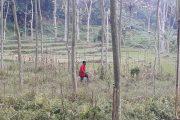 LSM Somasi Minta Perkebunan PTPN XII JATIRONO kembalikan lahan sesuai Tanaman Komuditi