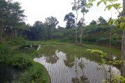 Lahan Perkebunan Disulap menjadi Area Persawahan di PTPN XII Jatirono