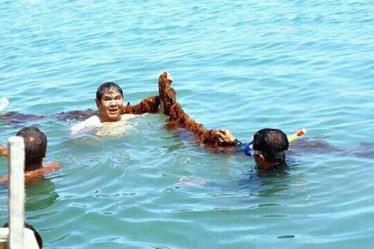 Petani Rumput Laut Kupang Barat Dukung Medah Calon Gubernur