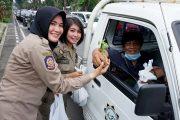Ajak Warga Tanam Cabai Lewat Surabaya Pedes