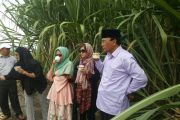 Humpuss Group Tinjau Perkebunan Tebu Aceh Tengah