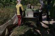 Tak Kenal Lelah Babinsa Sukolilo Dampingi Petani, Wujudkan Program Ketahanan Pangan