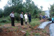 Dinas Pertanian Torut Pacu Tanam Hortikultura,Kurangi Rasa Ketergantungan