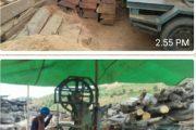 Diduga Belum Mengantongi Izin , Operasi Pengelolaan Kayu Diareal  PT. Berau Coal di Stop
