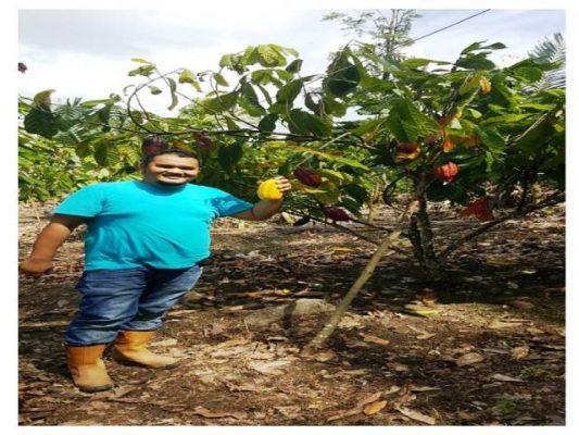 Budidaya Kakao Memiliki Prospek Yang Besar Bagi Petani