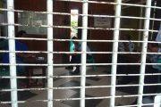 Siang Bolong, Dua Tahanan Lapas Tuban Kabur