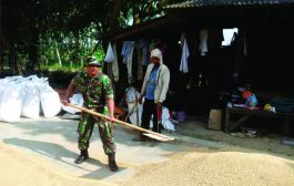 "Target ""Sergap"", BABINSA ""Gerak Cepat"" Kumpulkan Hasil Panen di Arosbaya Bangkalan"