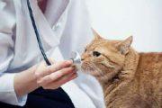 Masa sih Kucing Terkena Flu?