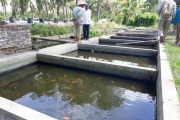 Limbah Cair Pabrik Sari Apel Diduga Cemari Peternak Ikan KOI Sananrejo