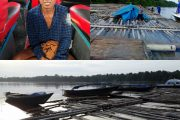 Tiga  Ribu Batang Kayu Illegal Di Tangkap Polres Kapuas