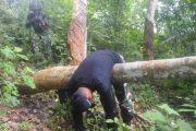 Raider Khusus Bertempur di Hutan Aceh Timur