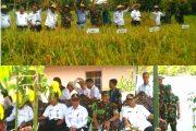 Walikota Palangkaraya Dan Dandim 1016/Plk Panen Bersama Di Lahan Gambut